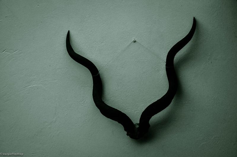 Still Life with Kudu Horns.