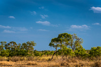 Just another quiet, sunny perfect day in the Kruger
