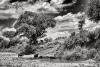 Kruger landscape with buffalo and fish eagle