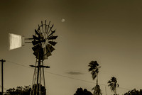 A windmill, a moon, two palm trees and a pesky telephone wire